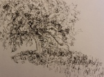Molly's Tree- pen and ink doodle