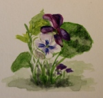 Violets- watercolor sketch